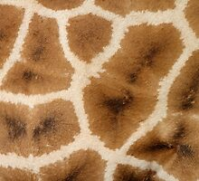 Rothschild's Giraffe Hide by Carole-Anne