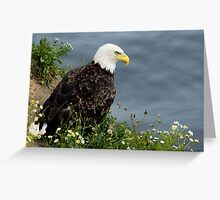 Bald Eagle on the cliffs Greeting Card