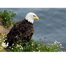 Bald Eagle on the cliffs Photographic Print