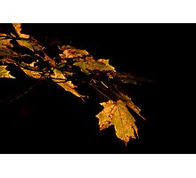 Fall leaves. Photographic Print
