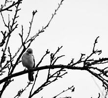 Winter Birds by HanieBCreations