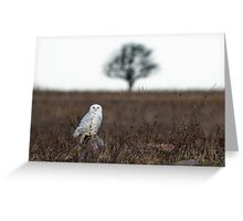 Snowy Owl in a field Greeting Card
