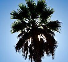 Palm Tree II by AnkhaDesh
