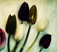 Tulip Ghosts by Natalie Durell