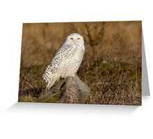 Snowy Owl perched on a rock Greeting Card