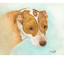 Red Nosed Pit Bull Dog Cathy Peek Animal Art Photographic Print