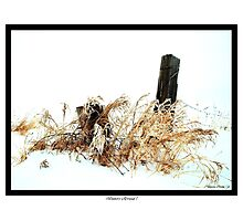 Winters Arrival ! Photographic Print