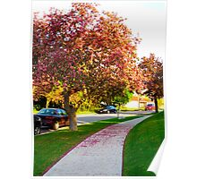 Pink paths Poster