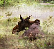Painted Moose by smalletphotos