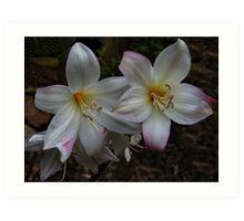 Bella Donna Lilies Art Print