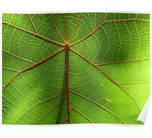Leaf 1 Poster