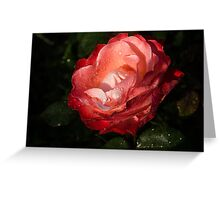 Chiaroscuro Rose – A Gift From My Mother's Garden Greeting Card