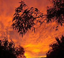 Gum Leaf Sunset by semlens
