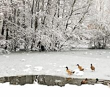Christmas at the Duck Pond by Nick Jenkins