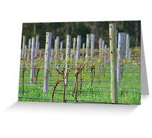 Vino Vines Greeting Card