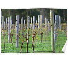 Vino Vines Poster