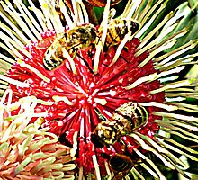 Hakea Pincushion Tree & Visitors by EdsMum