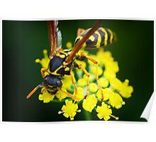 Wasp hunting Poster