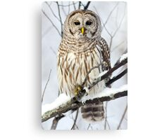 Barred Owl in winter Canvas Print