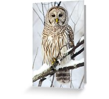 Barred Owl in winter Greeting Card
