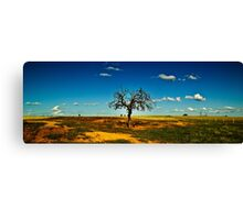 Sparse Tree Again - Parkes, NSW Canvas Print