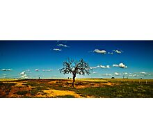 Sparse Tree Again - Parkes, NSW Photographic Print