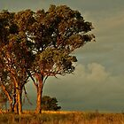 Trees at Dawn -  Yeoval, NSW by Phoebe Kerin
