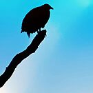 Silhouette of a Vulture by Bine