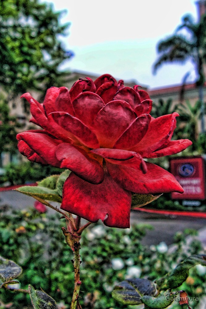 Red Rose in Control by GolemAura