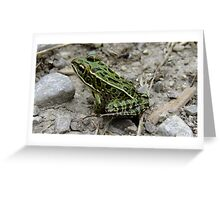 A Little Green Jewel Of Nature Greeting Card
