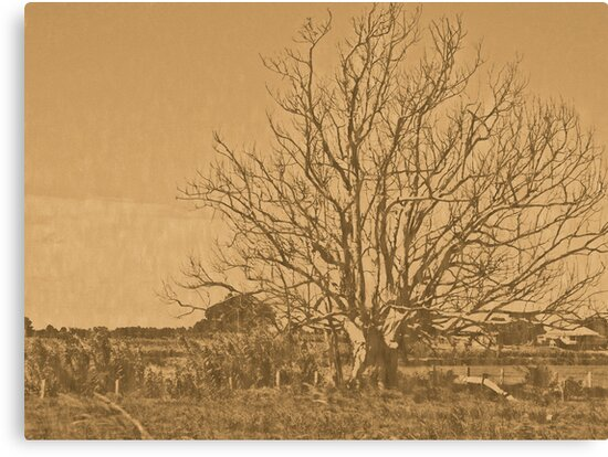 lithographic tree by donovan tillet