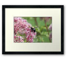 Workin Bee Framed Print