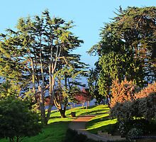 Alta Plaza Park by David Denny