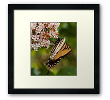Our Butterfly Framed Print