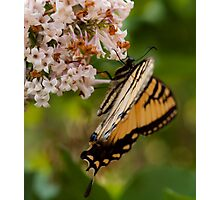 Our Butterfly Photographic Print