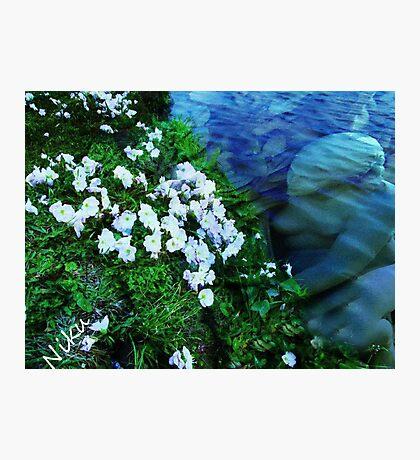 Sea Angel Photographic Print