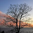Cloud Framed Tree by ColinKemp