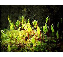 Green Fairy Lantins!              Photographic Print