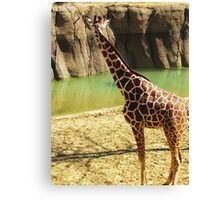 wild animals Canvas Print
