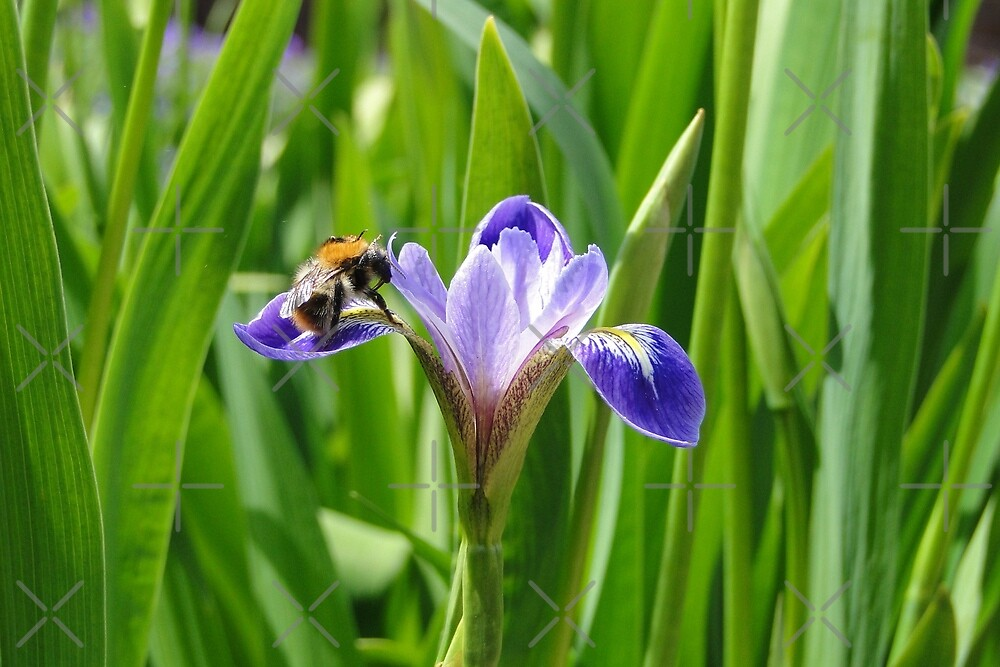 Nectar's in here somewhere by Barrie Woodward