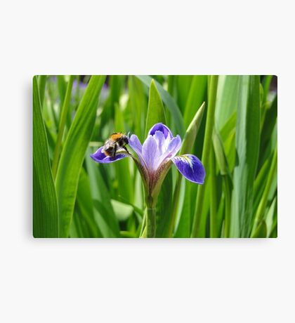 Nectar's in here somewhere Canvas Print