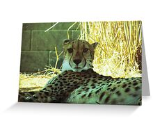 wild animals Greeting Card