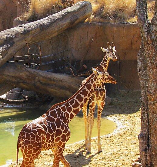 wild animals-friends by NIKULETSH