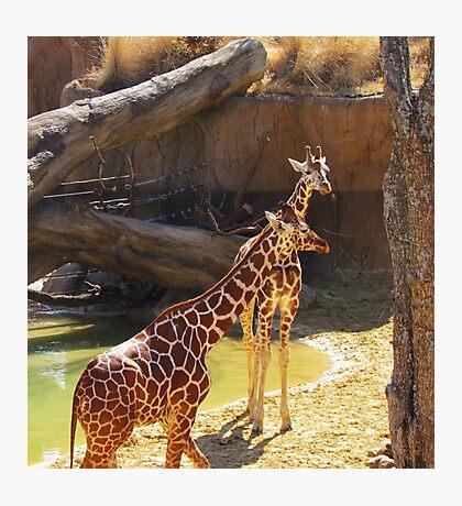 wild animals-friends Photographic Print
