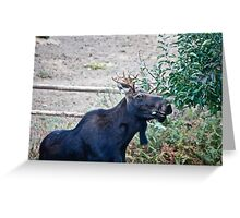 Moose Buffet Greeting Card