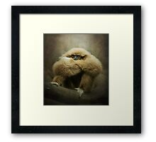 Study of a Gibbon...the Thinker.. Framed Print