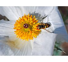 Hoover Fly Photographic Print