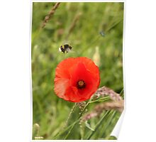 Poppy and Bee Poster