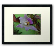 Beauty - Belleza Framed Print
