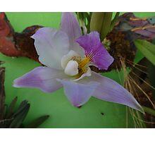 Beauty - Belleza Photographic Print